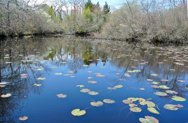 The Phoslock treatment for Mill Pond will not continue.  DANA SHAW