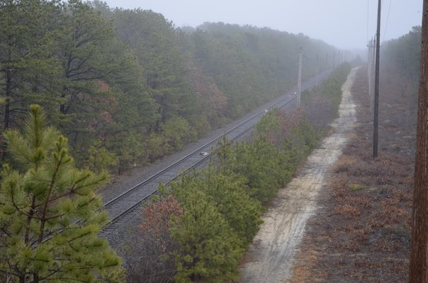 Four dead deer were seen on the railroad tracks near the overpass on Emmett Drive in East Quogue last week. ALEXA GORMAN