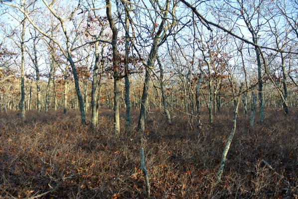 The wooded area near the location where Lilia Aucapina's body was found.