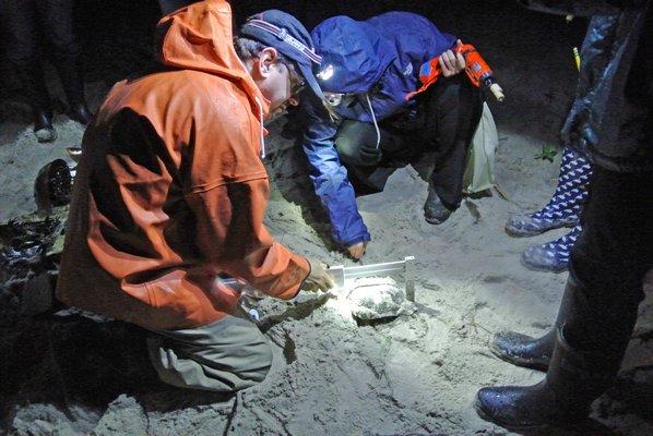 Dr. Matt Sclafani explains how to wrangle and tag a horseshoe crab.  DANA SHAW
