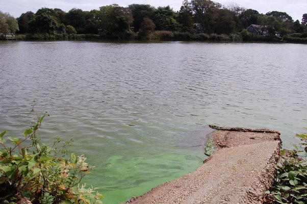 A bloom of blue-green algae seen in Lake Agawam in Southampton. JON WINKLER