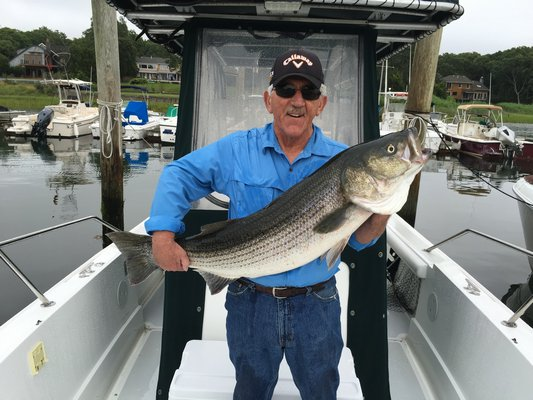 East Hampton Town Supervisor Larry Cantwell did a little solo canvassing of the town's maritime district and came back with some input from its striped constituents: they are very happy about bunker immigration.