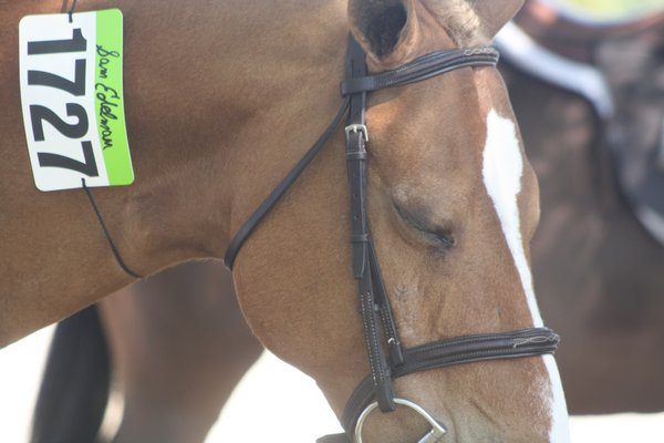 A horse displays a seventh-place ribbon on his bridle. CAILIN RILEY