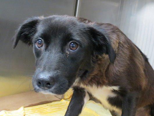 Rescued dog Katelynn COURTESY OF ARF