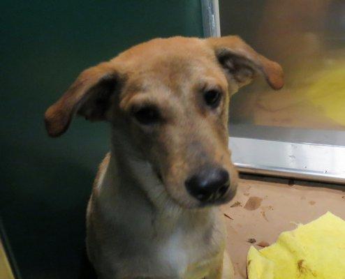 Rescued dog Nashville COURTESY OF ARF