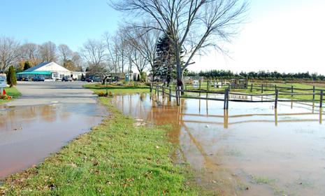Water pooled at the Green Thumb.