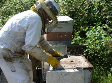 Eastern Long Island Beekeepers – New Group Forming!