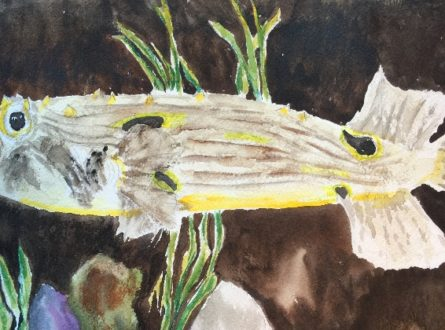 SOFO: COME DRAW WITH US—Drawing from Nature: Adults/Teens 15+