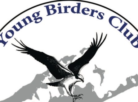 SOFO: SOFO Young Birders Club: Ages 8-18
