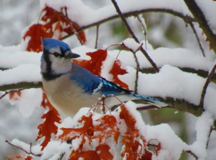 SOFO: Free Winter School Break Programs  with South Fork Natural History Museum (SOFO) Environmental Educators