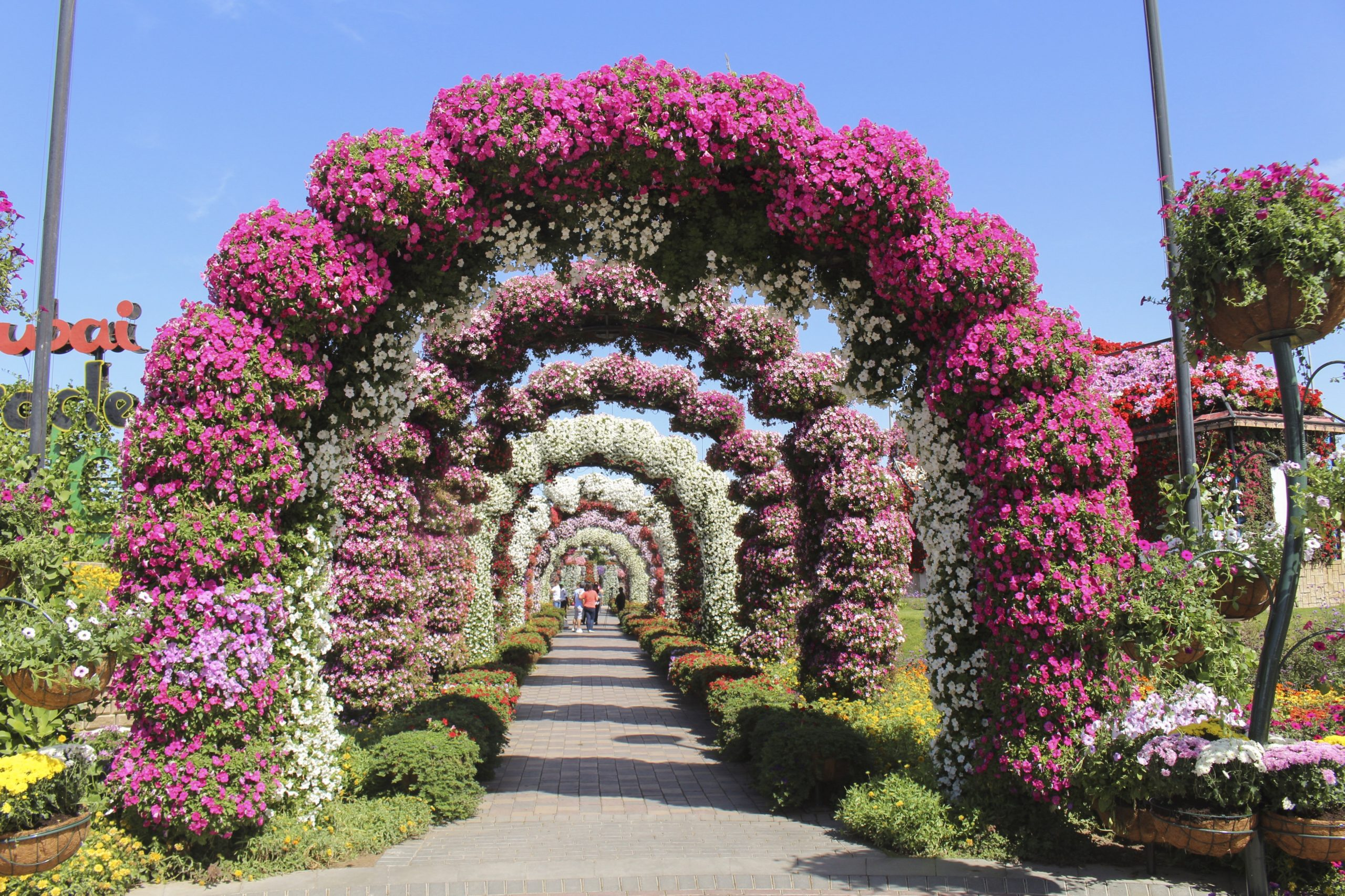 The Miracle Garden (Dubai, United Arab Emirates) from Chris Woods's