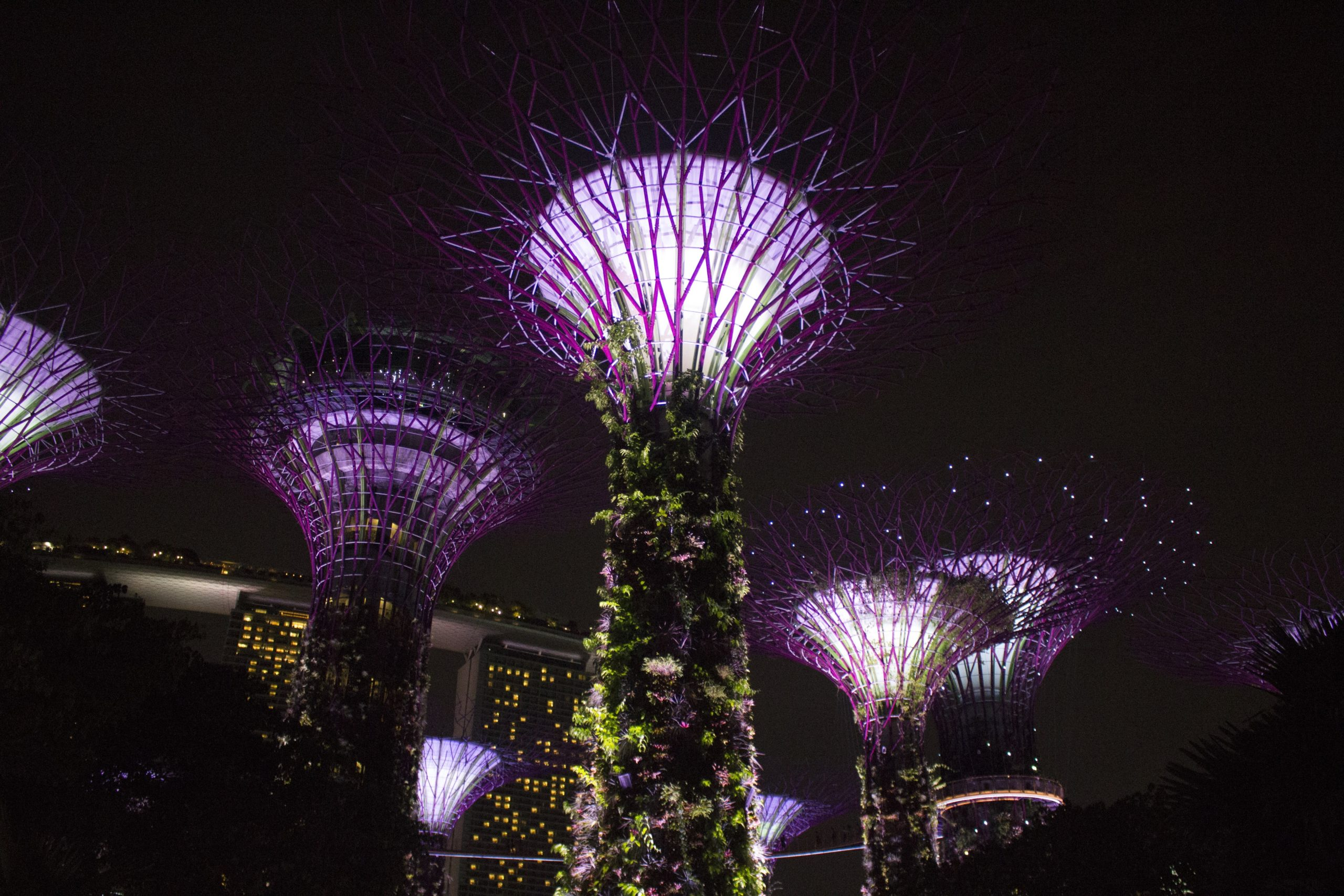 Gardens by the Bay and Parkroyal Hotel (Singapore) from Chris Woods's book
