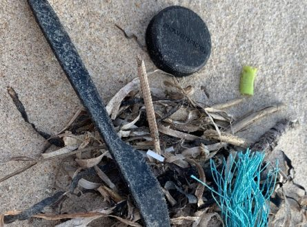SOFO: SOFO Cleans the Beach—Help Needed! All Ages