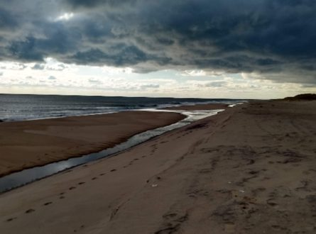 SOFO: Winter Beach Walk at Sagg Main Beach: Adults/Children 6+