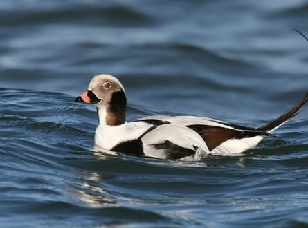 SOFO: Birding with John Turner—Feathered Marvels at Montauk Point: Adults