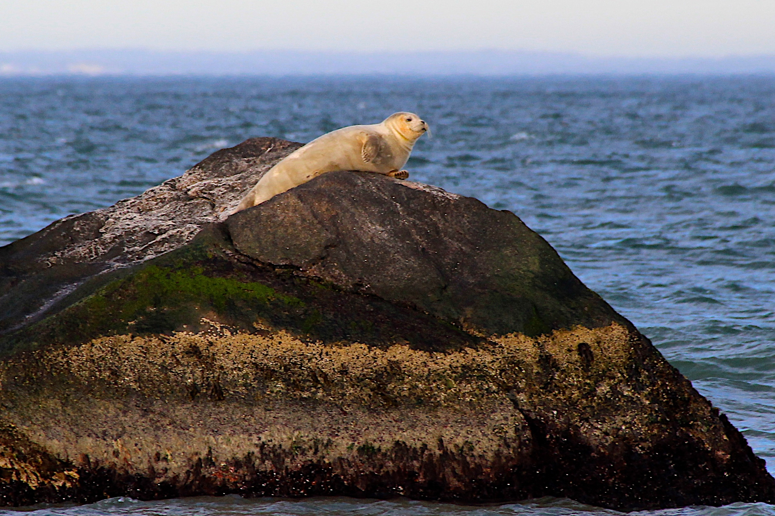 It's the time of year for seal sightings and those who ventured to Montauk Point on Saturday were not disappointed. KYRIL BROMLEY