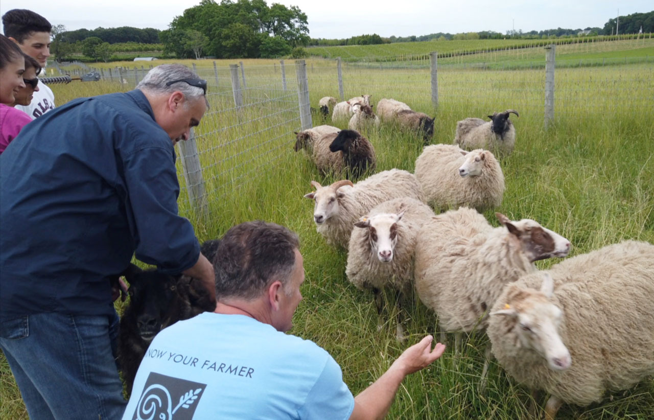 Chef George Hirsch meeting Icelandic sheep with farmer Tom Geppel at 8 Hands Family Farm.