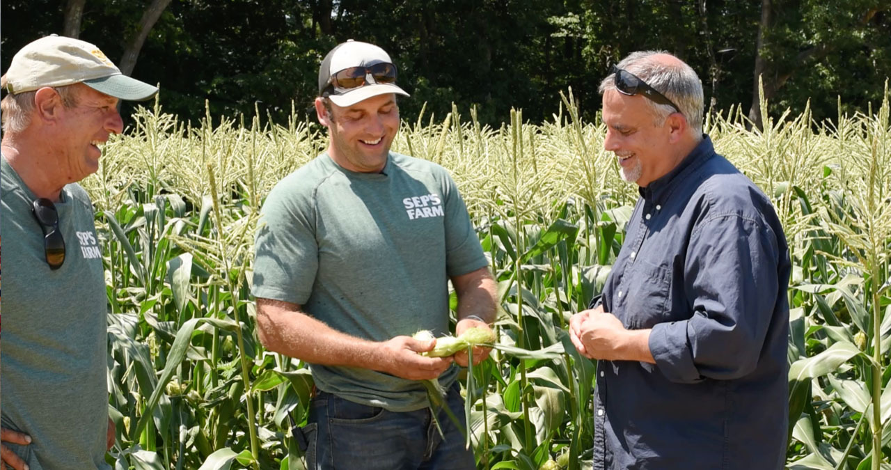 Pete and Eric at Seps Family Farm demonstrate to Chef George Hirsch how corn is polinated.