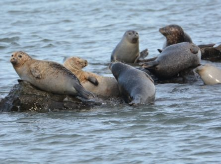 SOFO: Third Winter Seal Walk at Cupsogue Beach County Park: Adults/Children 6+