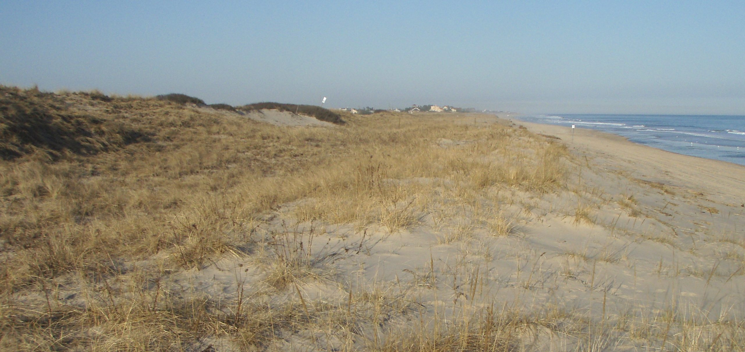 In some places, including this stretch of ocean beach in Amagansett, the shoreline and dune system has been accreting.