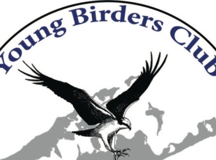 SOFO: SOFO's Young Birders Club: Ages 8-18