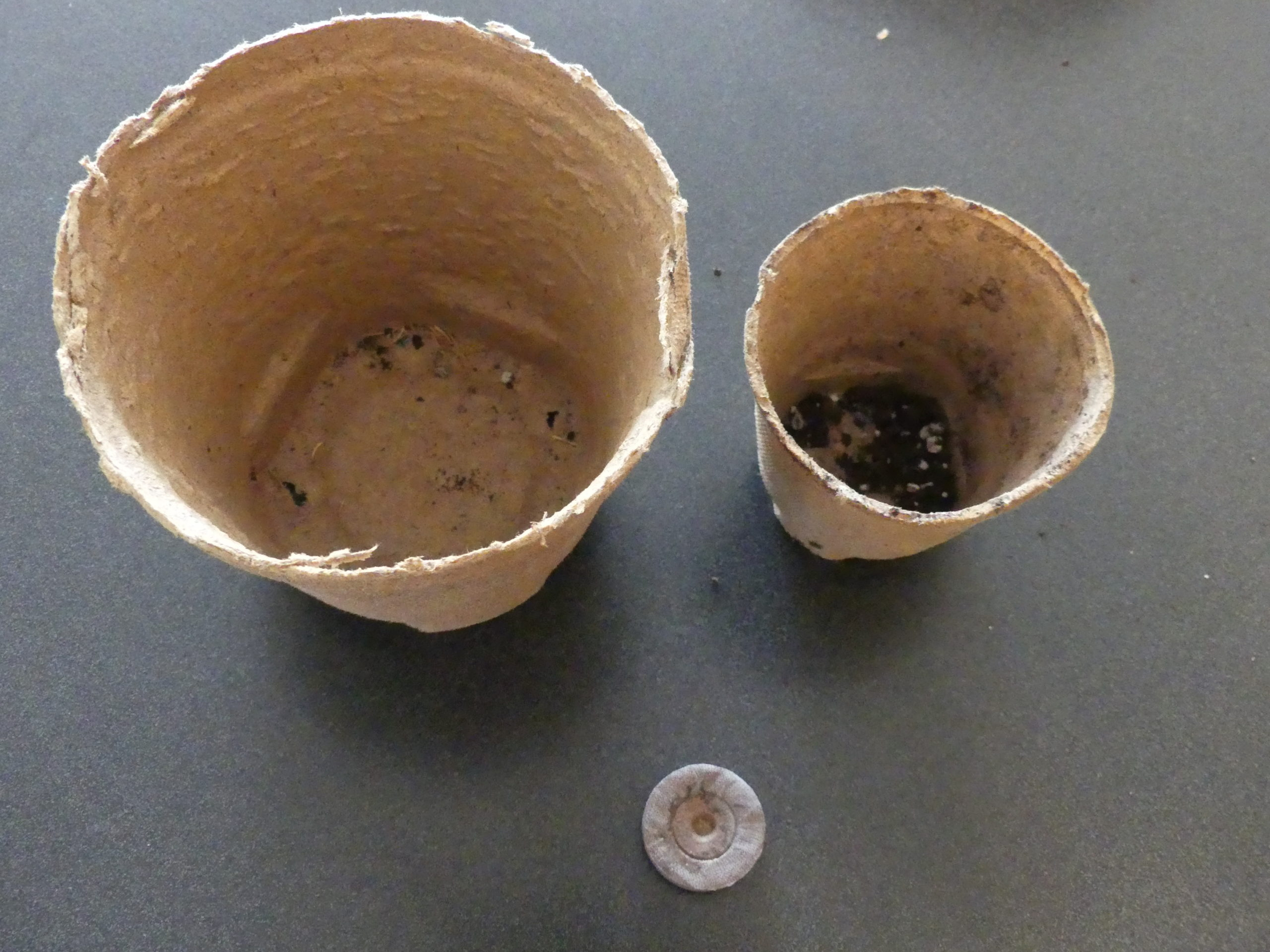 Peat pots and pellets from Jiffy offer convenient ways of starting vegetable plants at home them planting them directly into the garden pot and all with no transplant damage. Left is a 6-inch peat pot, right, a 4-inch, and bottom is a compressed Jiffy pellet that just needs water to expand for seeding. ANDREW MESSINGER