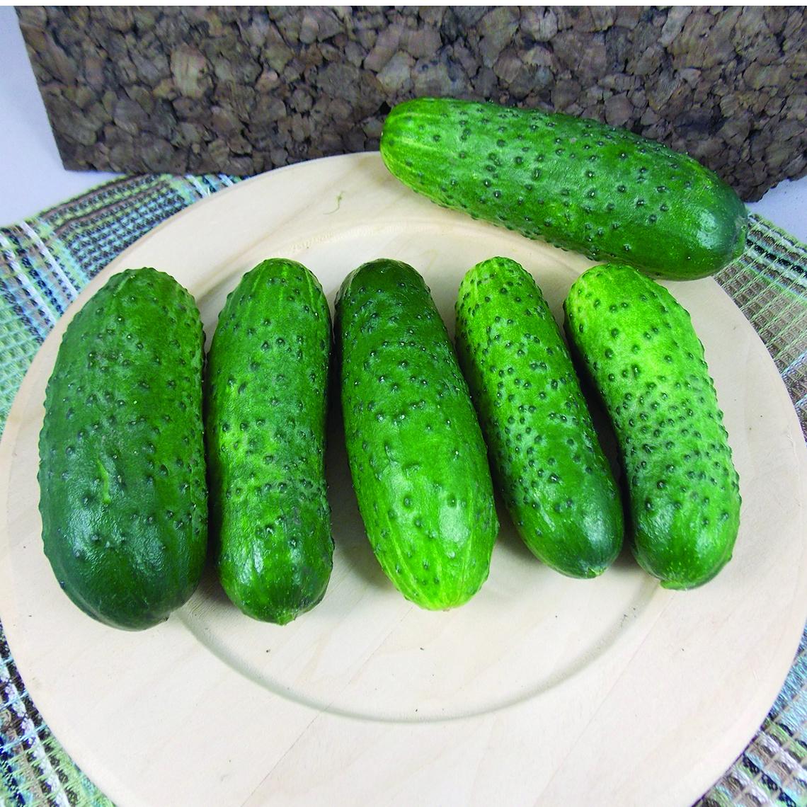 Cucumber Artist Hybrid  JUNG SEED