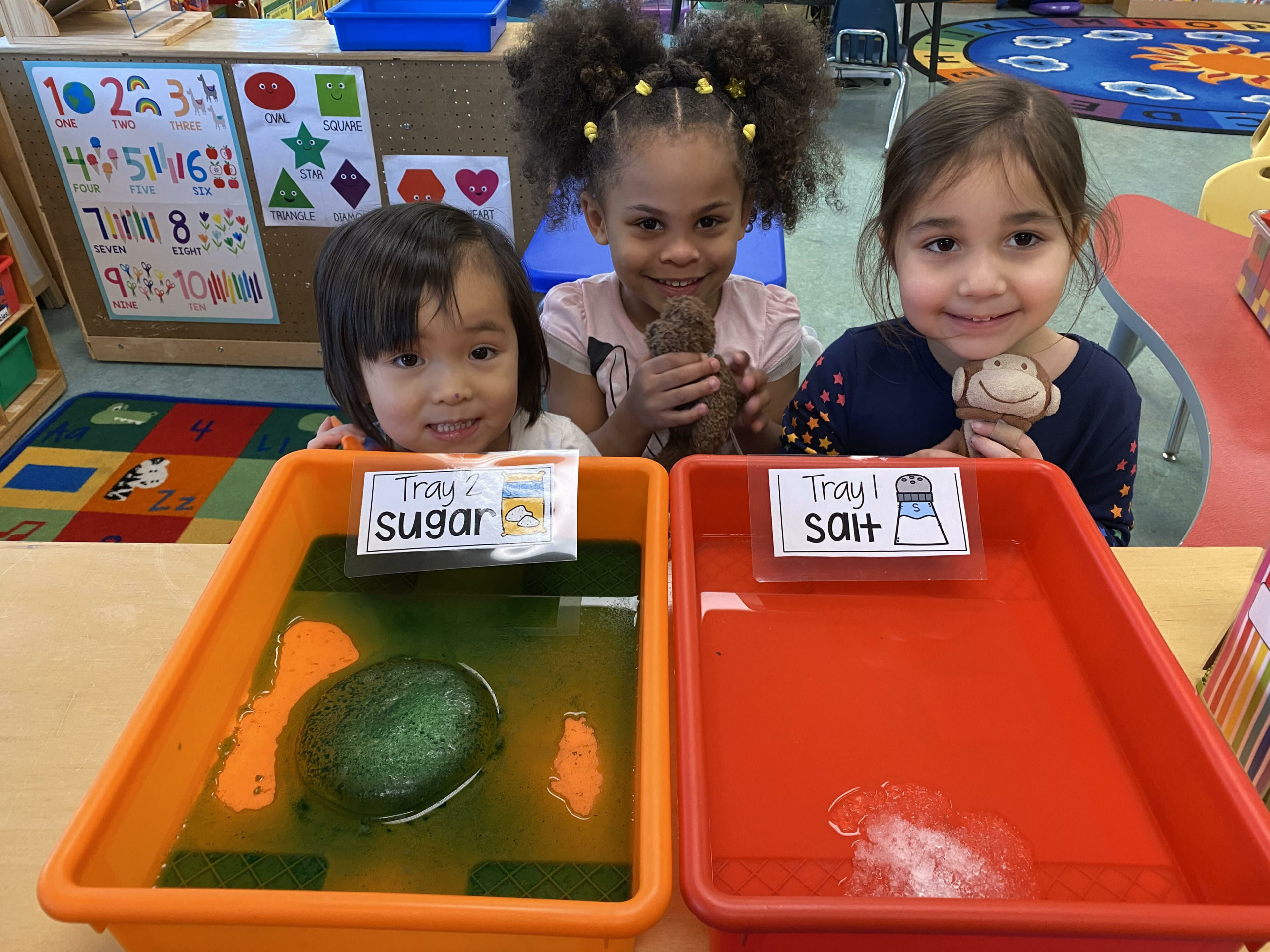 Bridgehampton School pre-K students, including from left, Meia Verzosa, Gianna Walker and Isabel Leon, conducted a science experiment in which hey explored whether salt or sugar would melt an ice block faster. They first made a prediction by casting a vote on a salt or sugar T-chart. Then, they observed the salt and sugar covered ice blocks and drew a picture of their observations. The scientific experiment resulted in learning that the ice melted quicker using the salt.