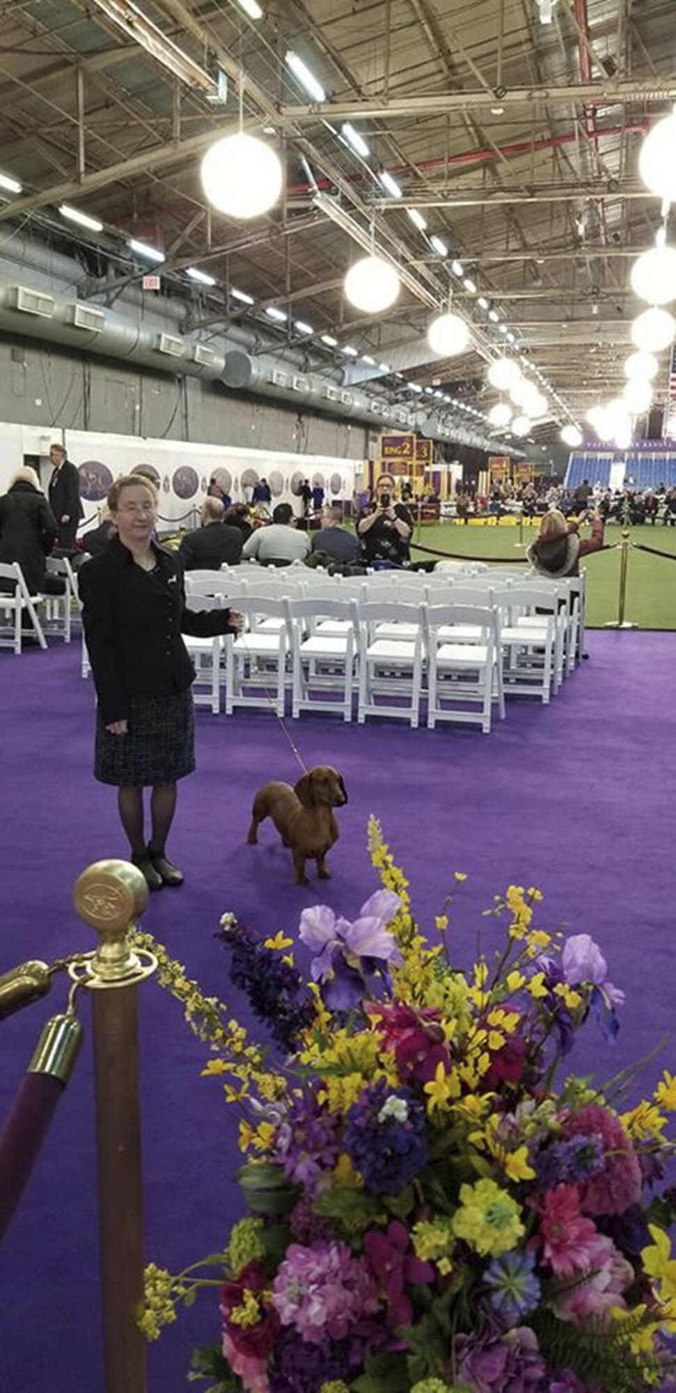 Alex Geisler with her Smooth Haired Dachshund, Hammer, at the Westminster Dog Show. SHELLY BORKOSKI