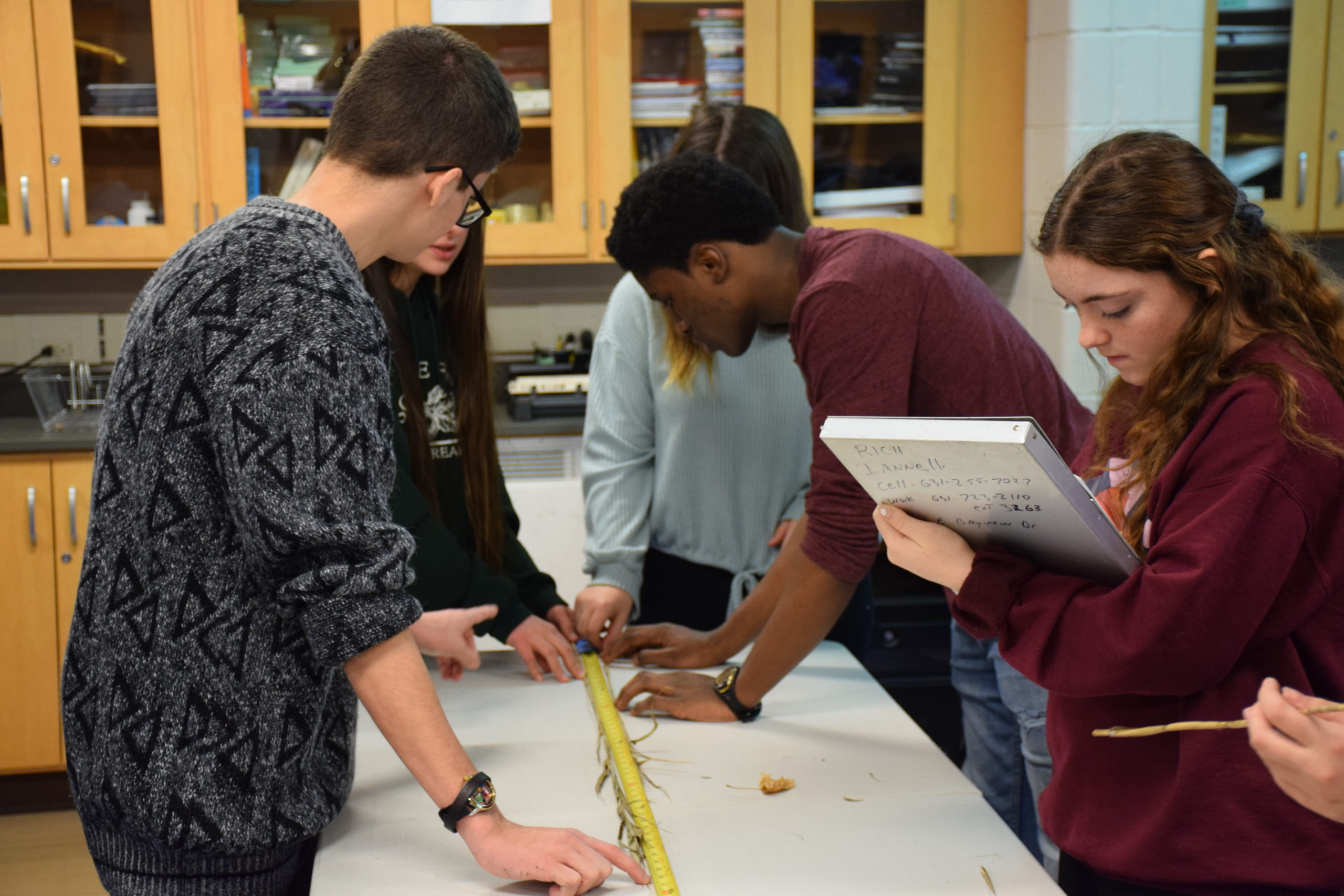 Hampton Bays High School Science Research and AP students recently assisted Cornell Cooperative Extension with a phragmite research project to help improve local habitats.