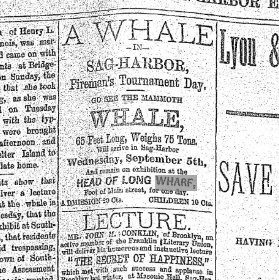 An advertisement that appeared in the August 6, 1888 edition of The Sag Harbor Express for the whale exhibit.