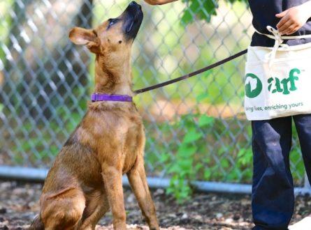 ARF Dog Training Classes