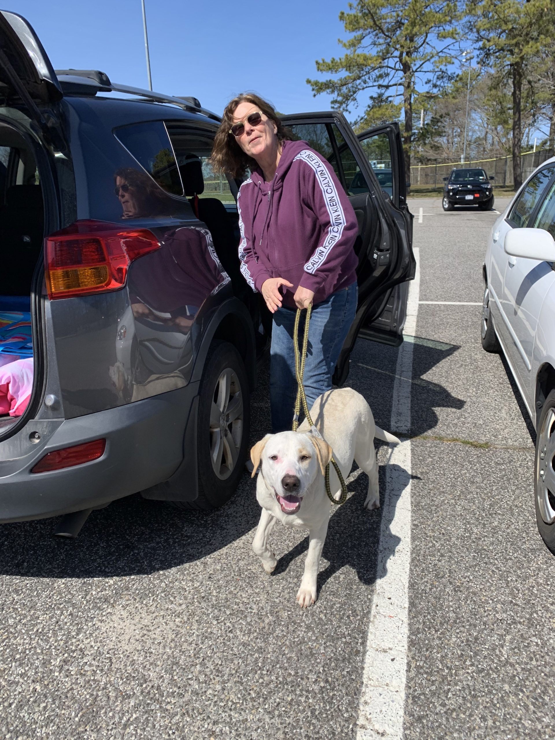 Lettie the lab from teh Southampton Animal Shelter Foundation heads to a foster home with Susan Reilly on Friday. Courtesy SASF