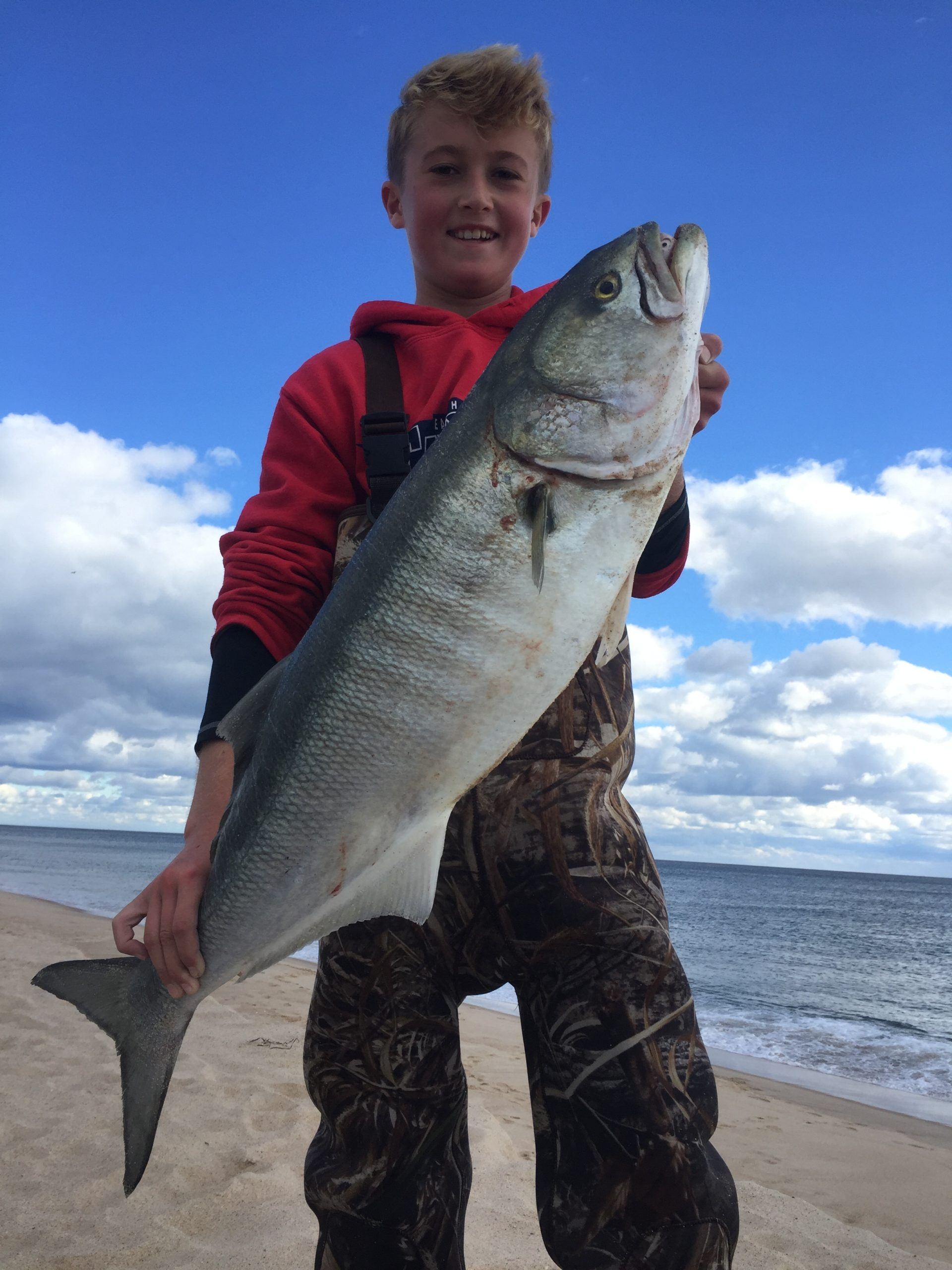 Big bluefish like this one caught a few years ago by Cam McAuliffe have been dwindling for decades and are now at levels so low that fisheries managers say the harvest needs to be cut by 65 percent.