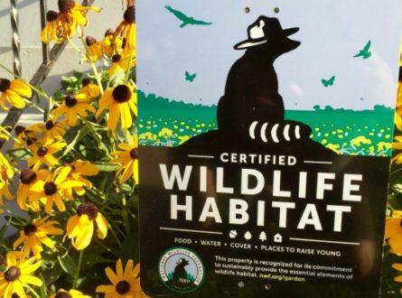Turning your Yard into a Certified Wildlife Habitat via Zoom with Jennifer Keller