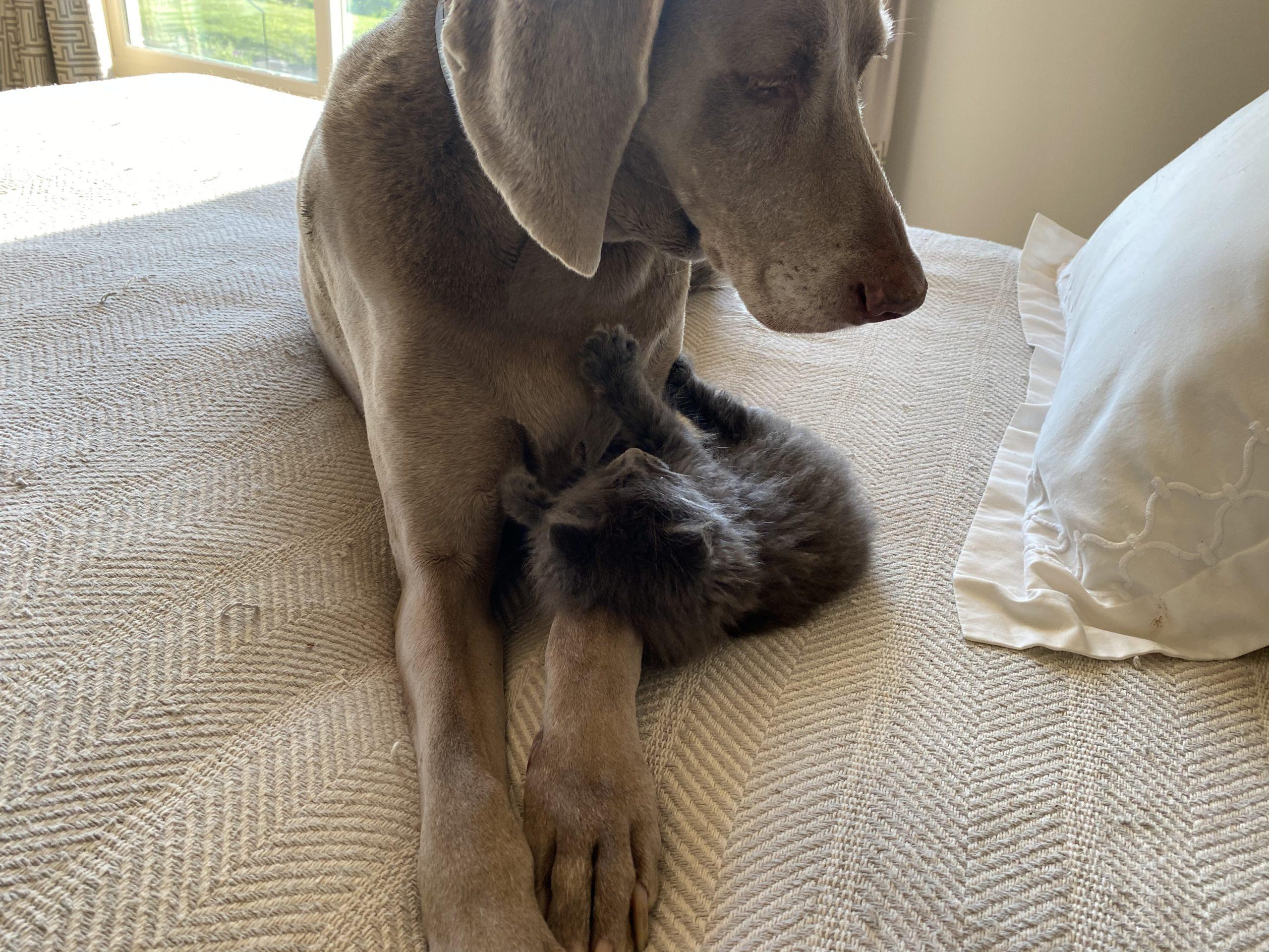 Watson and Charlotte at home.