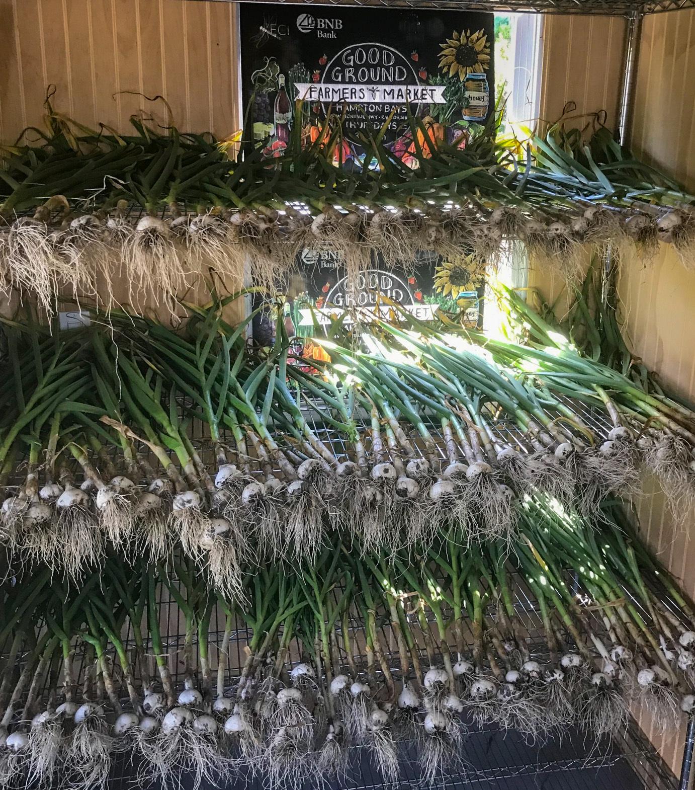 Good Ground Heritage Garden's garlic harvest.