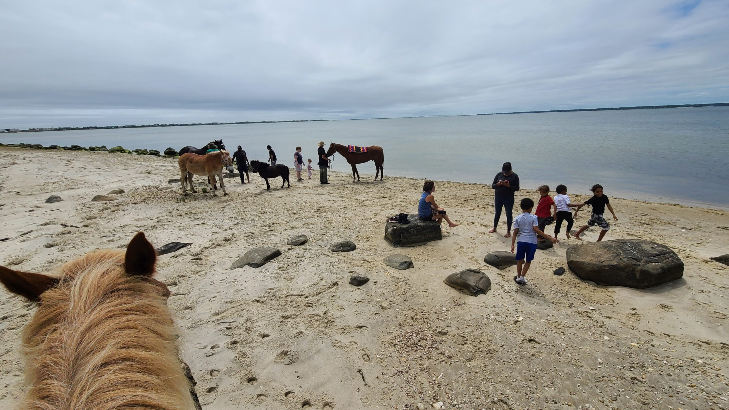 The horses have a day at the beach.