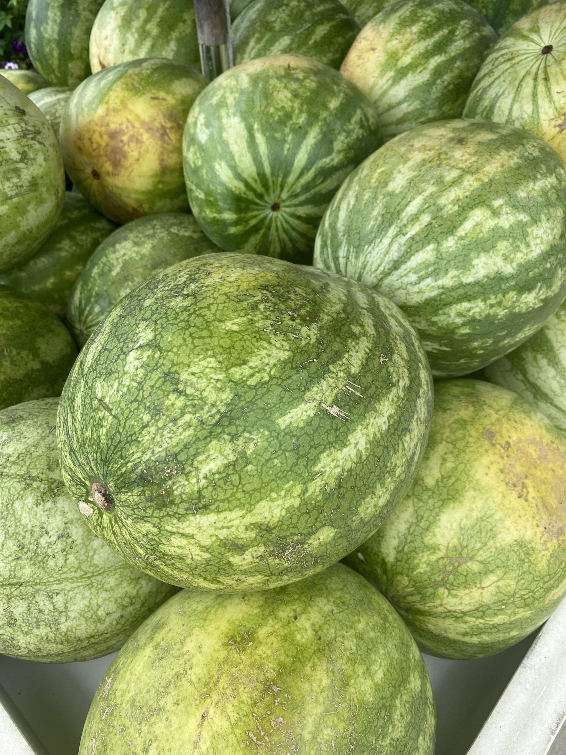 Halsey Farm's watermelons.     STEVEN STOLMAN
