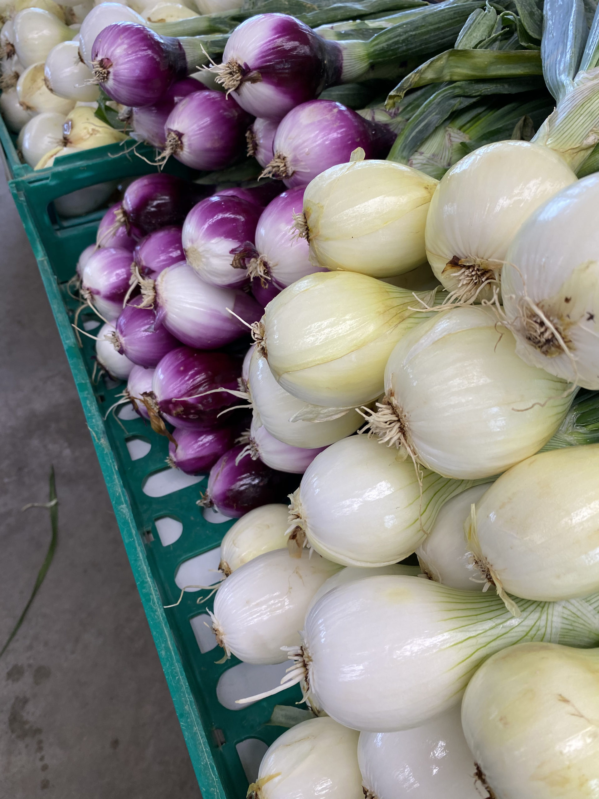 Onions and shallots galore.    STEVEN STOLMAN