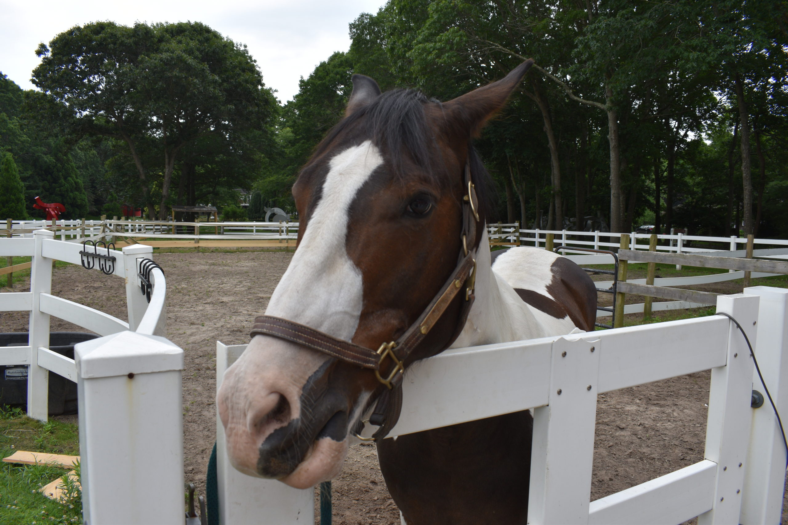 Meet Paco, a silly horse who likes to roll in the warm mud!