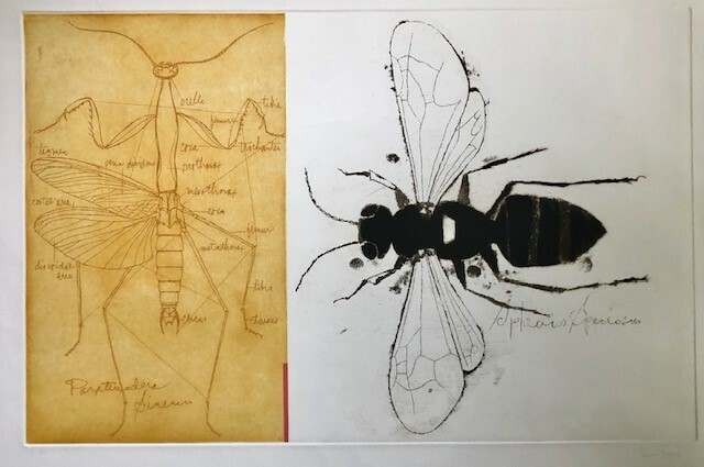 """Species Speciosis"" Claus Hoie (1911–2007) circa 1978, etching on paper, artist proof, pencil signed, image 18"" x 28"""