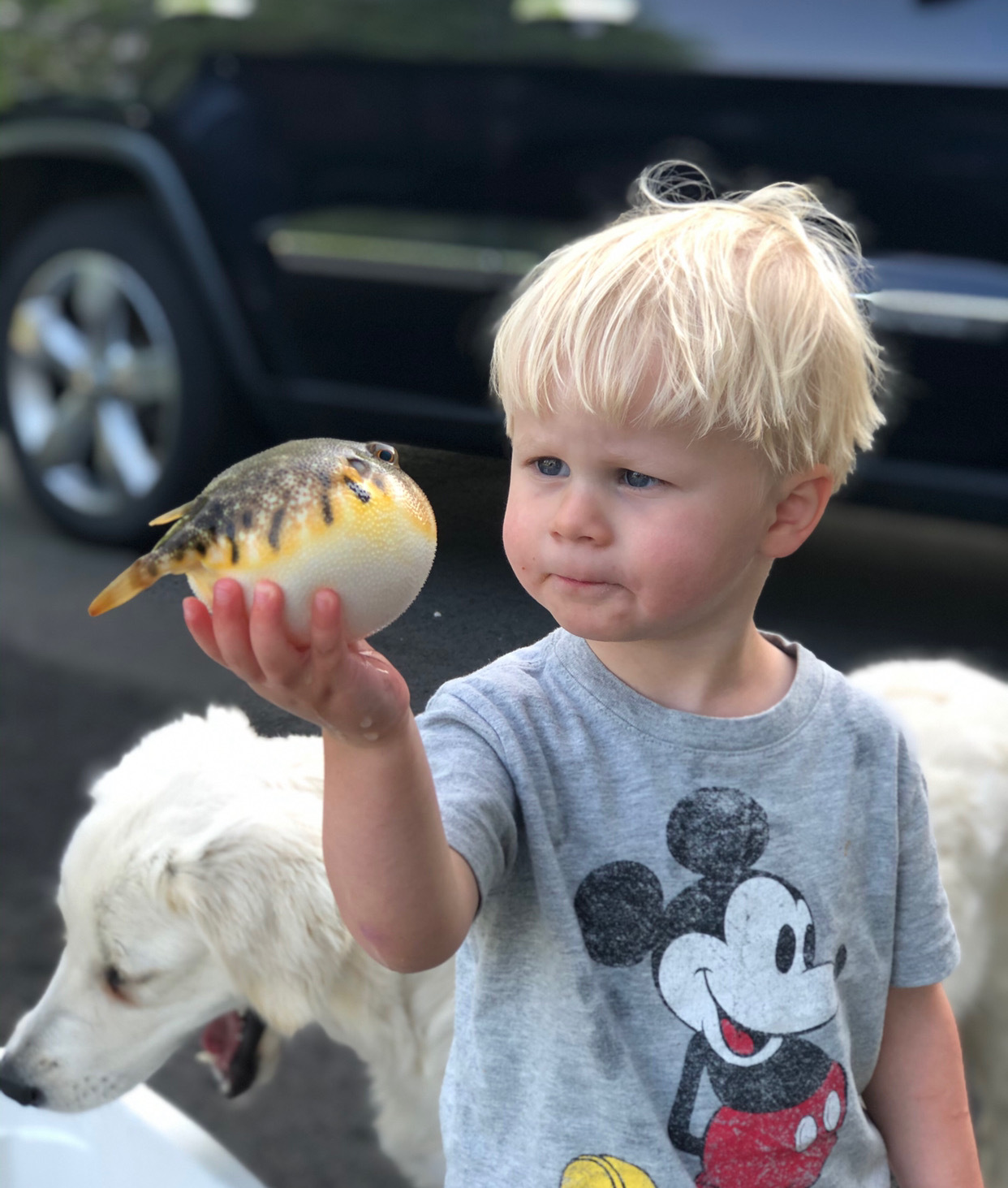 Try as he might, Henry Forsberg can't puff up like his blowfish friend here can.