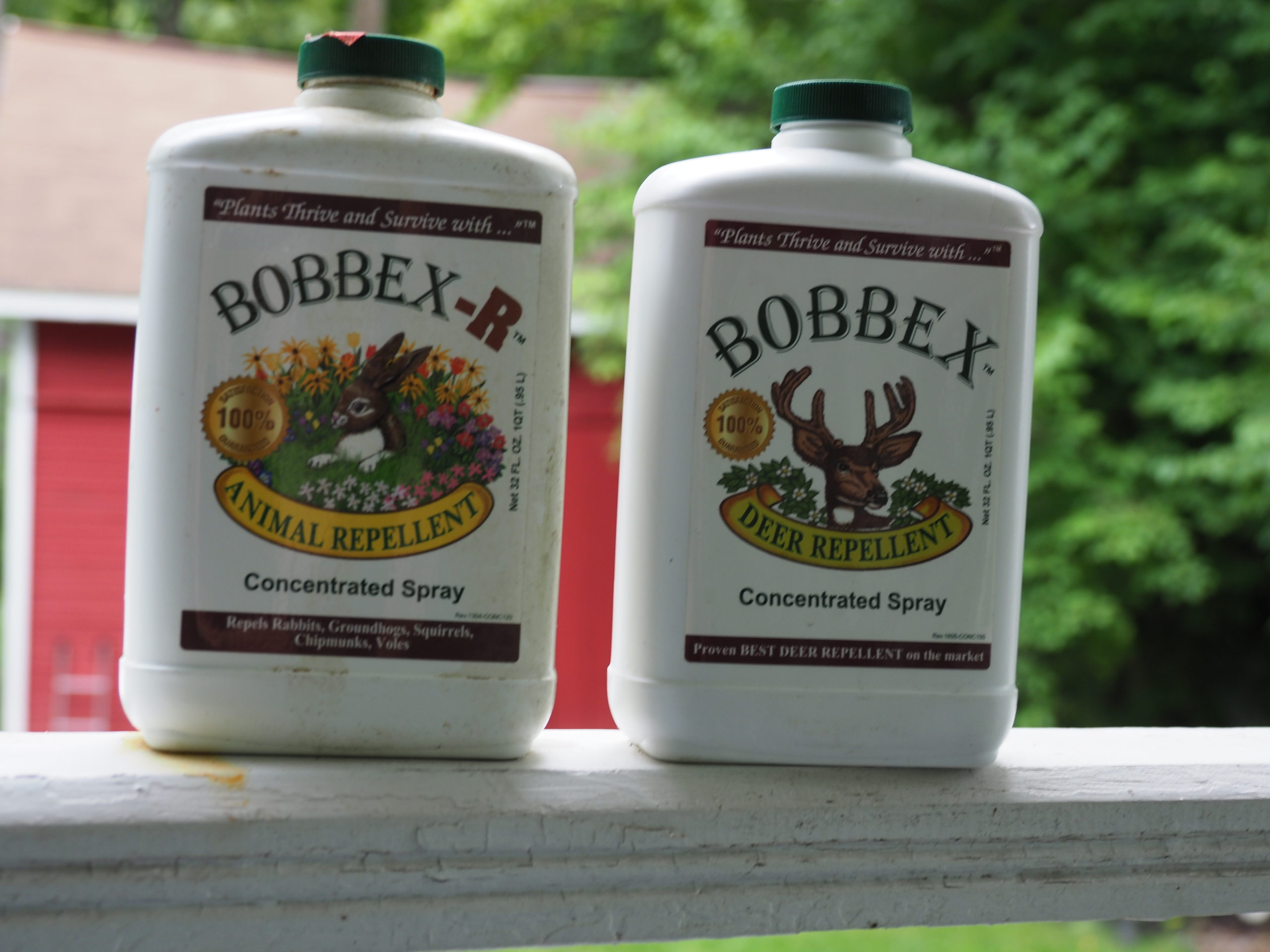 Only Bobbex-R (left) will work as a bulb dip to repel deer, mice, voles and squirrels. The dip only lasts for the first year, but in following years Bobbex-R can be used as a soil drench. The Bobbex on the right, the standard Bobbex, does not have the same repellency.