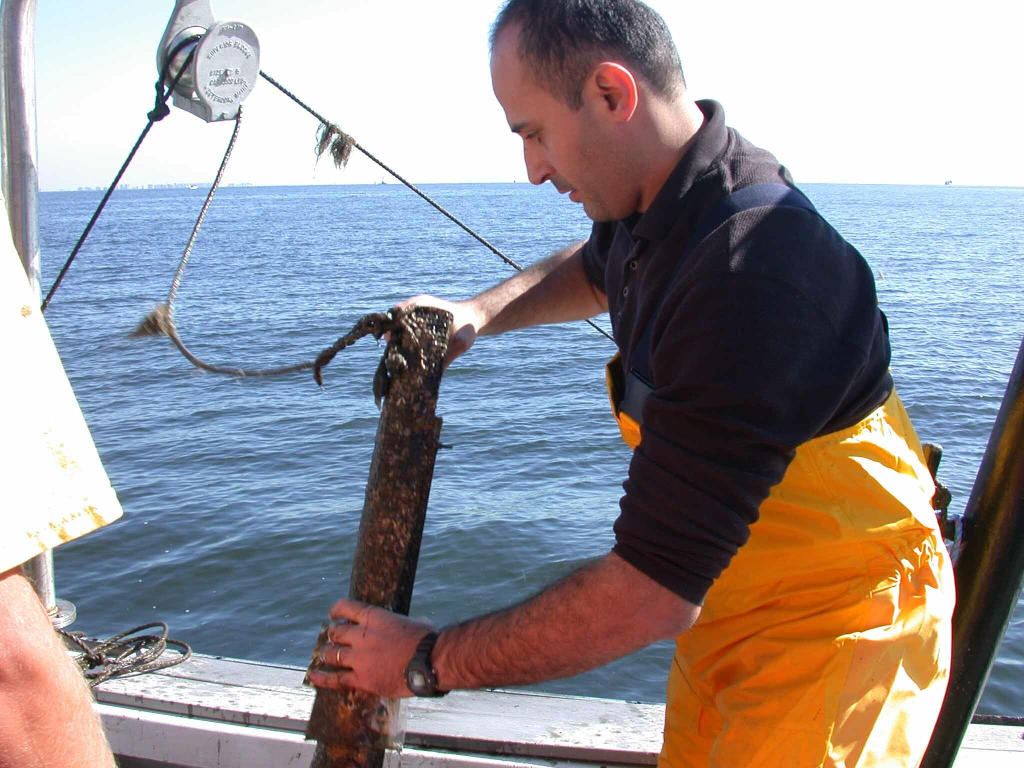 Dr. Bassem Allam, a vetrinary pathologist with Stony Brook University, is working with other marine scientists to guage the role of a parasite in the broad die-offs of bay scallops seen in 2019 and 2020.