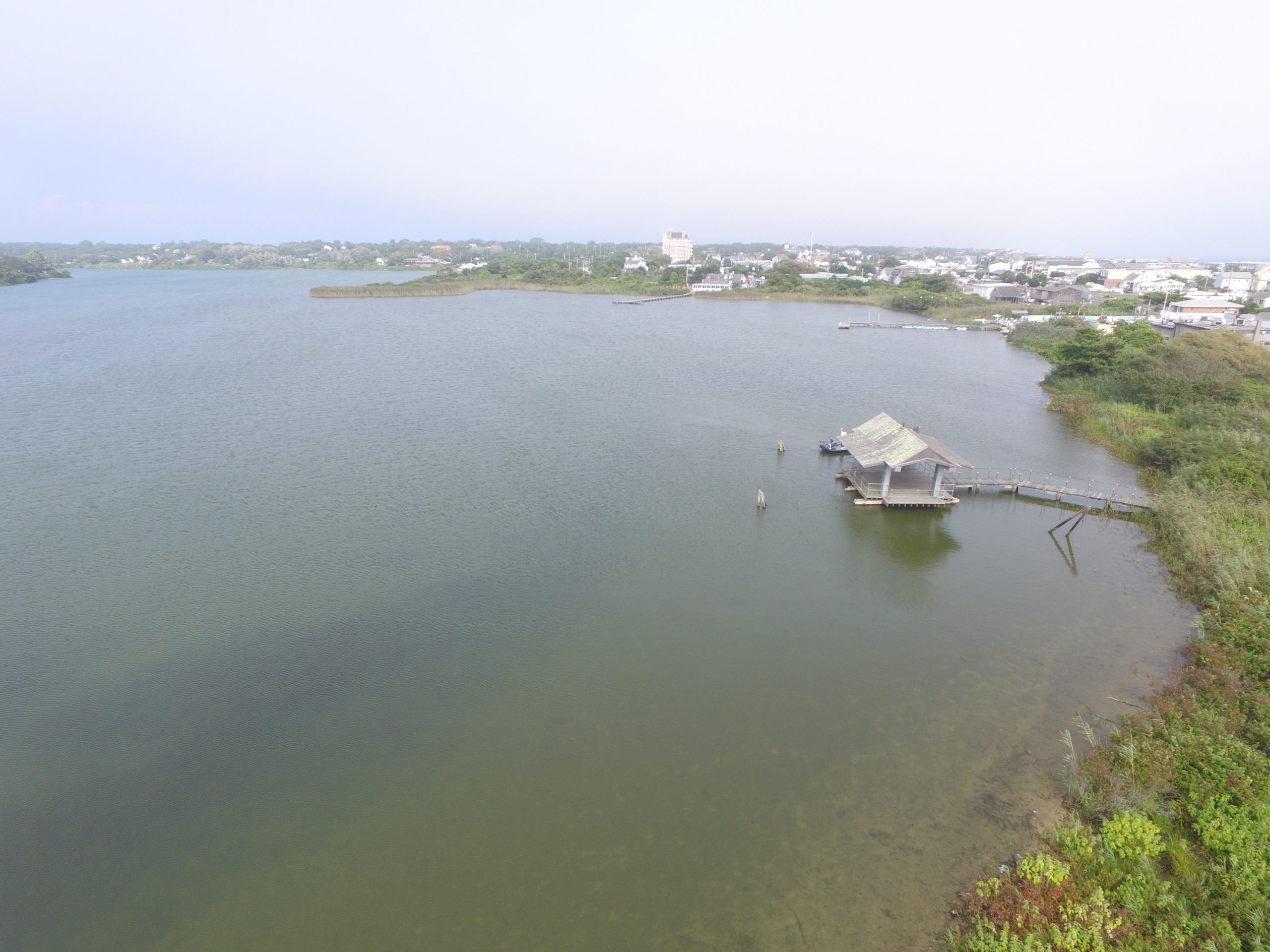 Algae blooms in places like Montauk's Fort Pond are frequently set off after heavy rains wash large amounts of nutrients into water. If they come following long dry periods, the effects can be ampliefied even further.