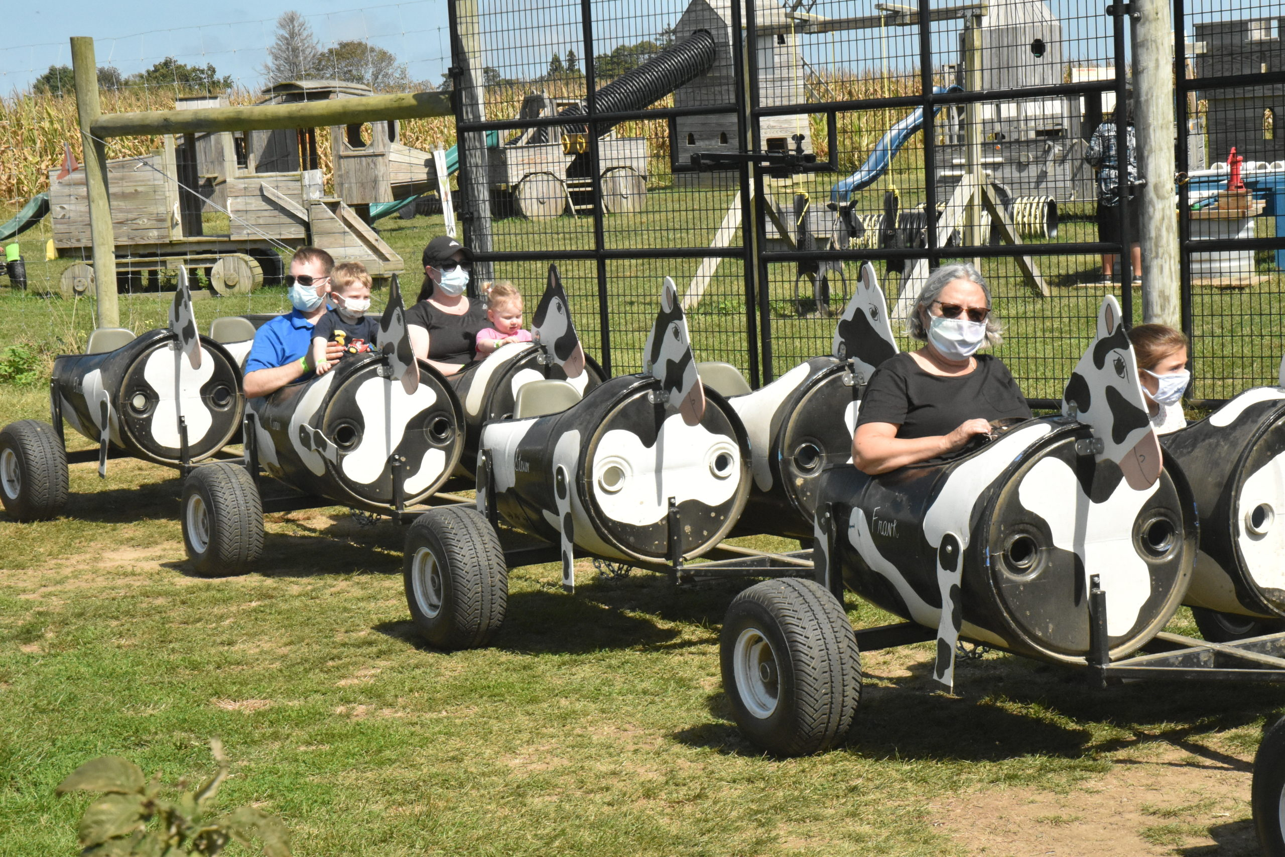 Riders on the cow train get a tour of Seven Ponds Orchard in Water Mill on Sunday. STEPHEN J. KOTZ
