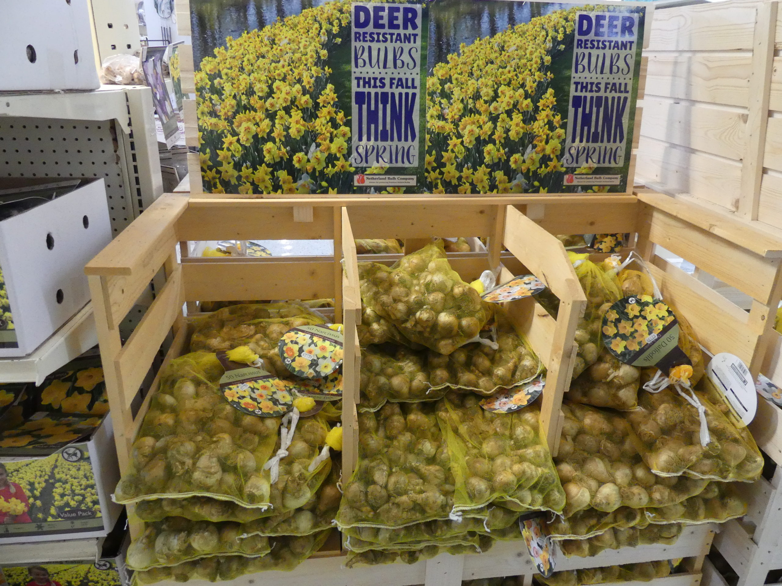 Prepackaged, bagged or bushel baskets of bulbs are usually less expensive than larger single bulbs, and these