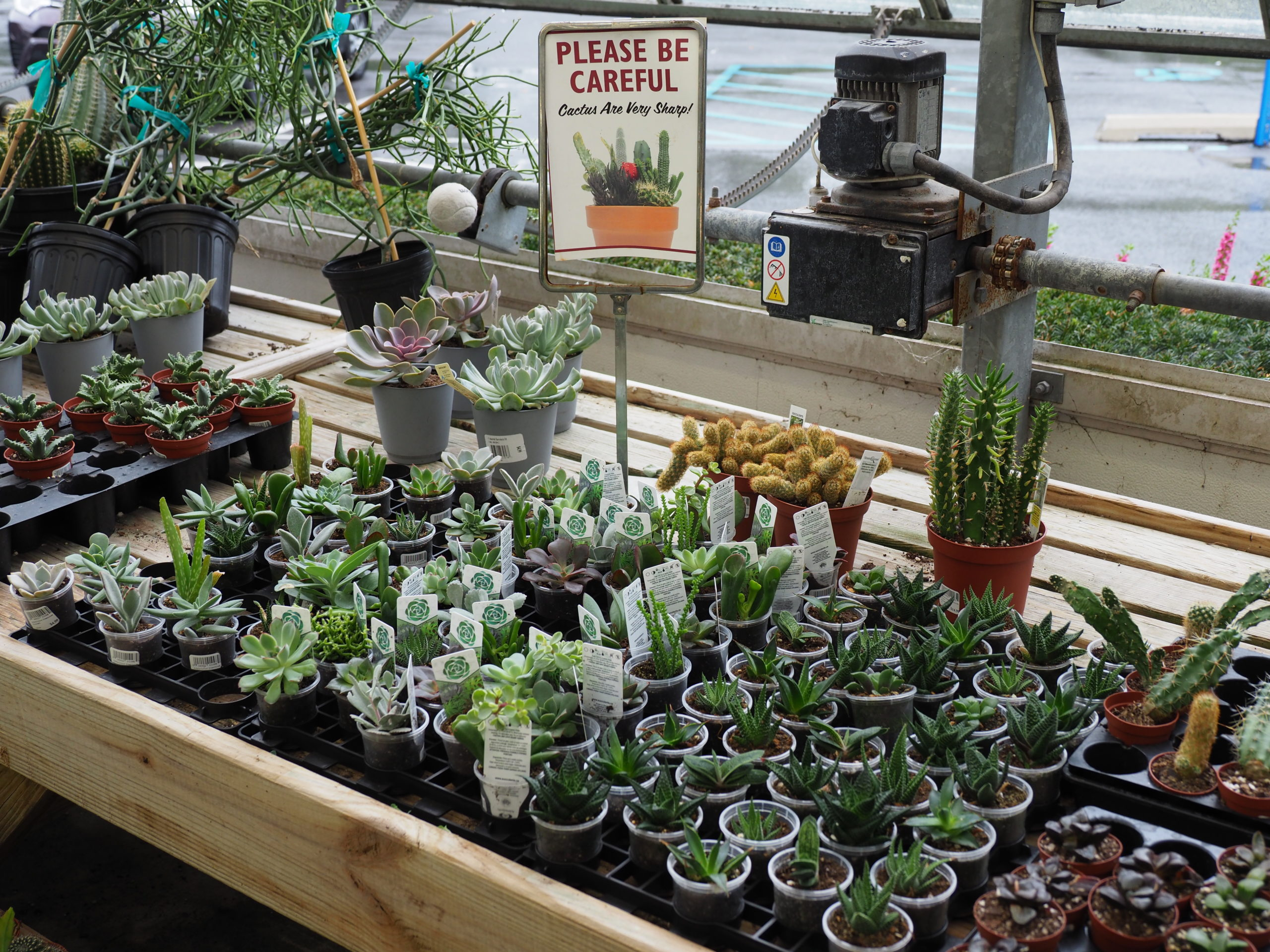 Cacti and succulents are slow growing, need plenty of light and can be quite fascinating when they flower. Great for children since they require little care but be sure to teach that the spines, even the tiniest, can be dangerous.