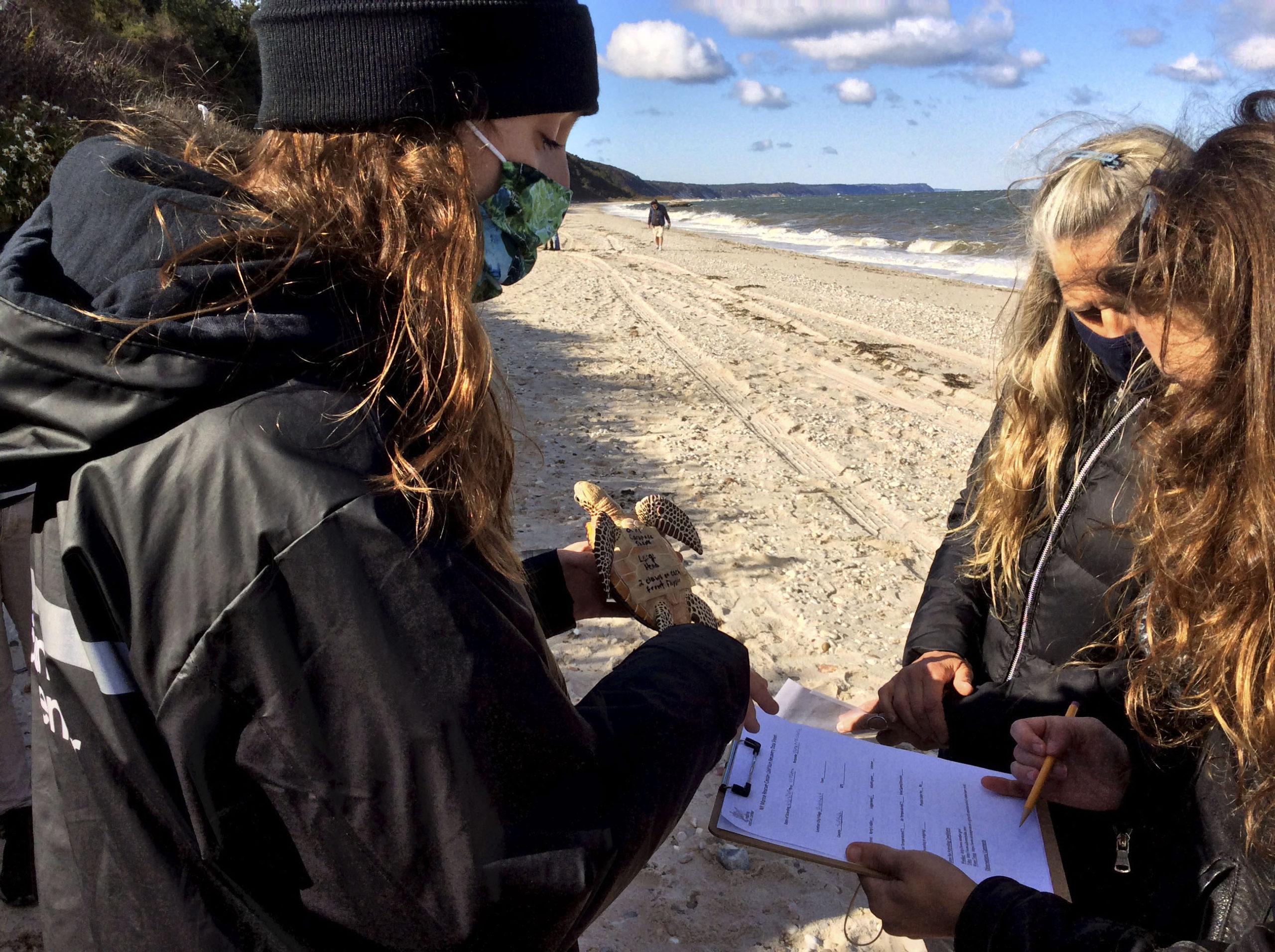 Katie Goulder helps volunteers identify sea turtles.   BRYAN BOYHAN